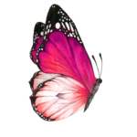 butterflyside_72_04
